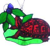 Box Turtle and Blackberries