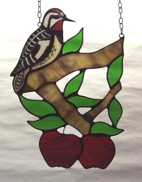 Sapsucker in Apple Tree
